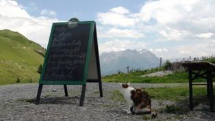 Et ægte østrigsk måltid i Tyrol